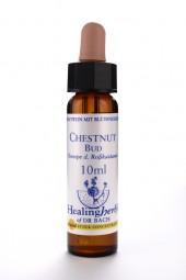 Chestnut Bud 10 ml Healing Herbs 107