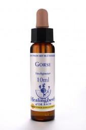 Gorse 10 ml Healing Herbs 113