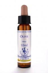 Olive 10 ml Healing Herbs 123