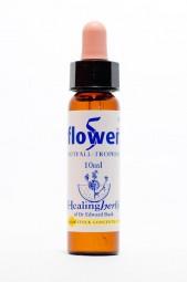 5 Flower Mischung 10 ml Healing Herbs 139